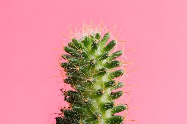 Plantas suculentas em fundo rosa pastel. postura plana.