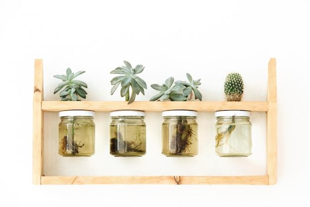 Plantas suculentas em garrafas de vidro penduradas