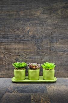 Plantas suculentas em pedra e madeira