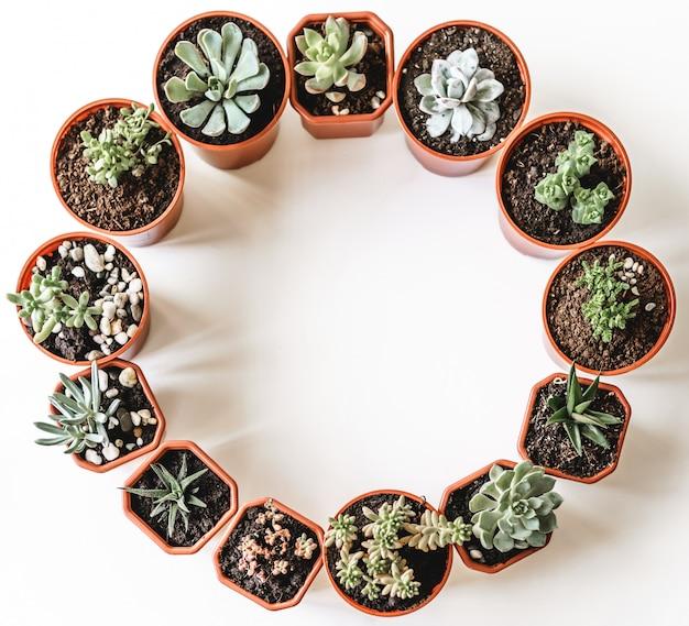 Plantas suculentas em vasos bonitas em uma vista de mesa branca