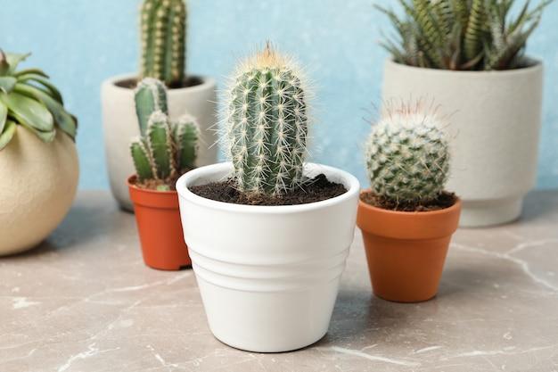 Plantas suculentas na mesa cinza. plantas de casa