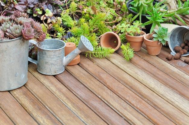 Plantas suculentas no terraço