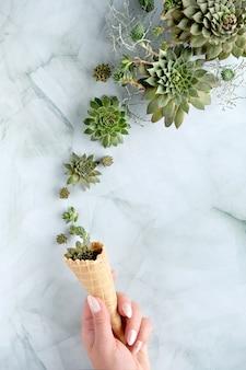 Plantas suculentas sempervivum em chifre de sorvete waffle seguradas com a mão. vista do topo