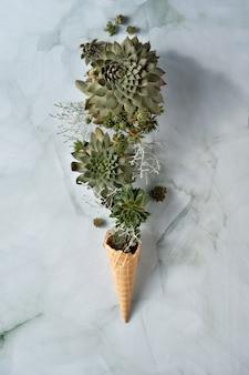 Plantas suculentas sempervivum em chifre de sorvete waffle seguradas com a mão.