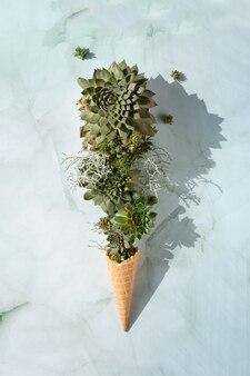 Plantas suculentas sempervivum em chifre de sorvete waffle.