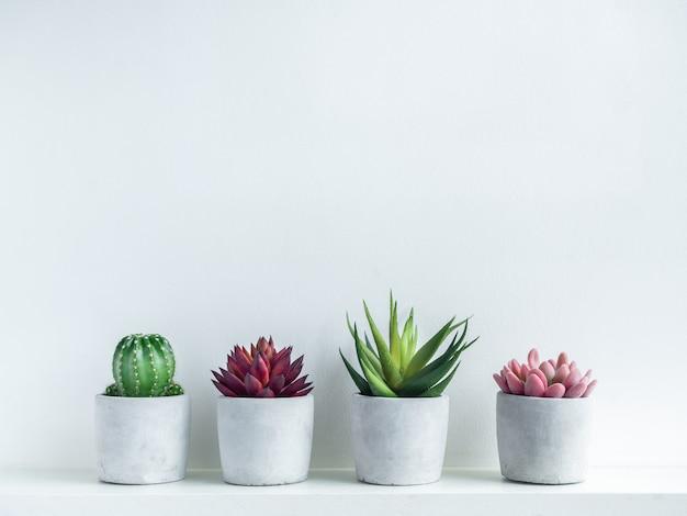 Plantas suculentas verdes, vermelhas e rosa e cactos verdes em plantadores de cimento geométricos modernos em madeira branca