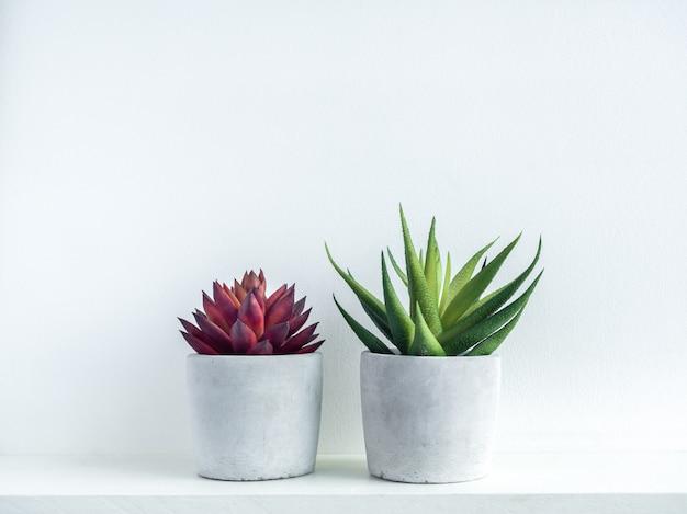 Plantas suculentas vermelhas e verdes em plantadores de cimento geométricos modernos na prateleira de madeira branca no branco