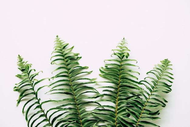 Plantas tropicais em branco