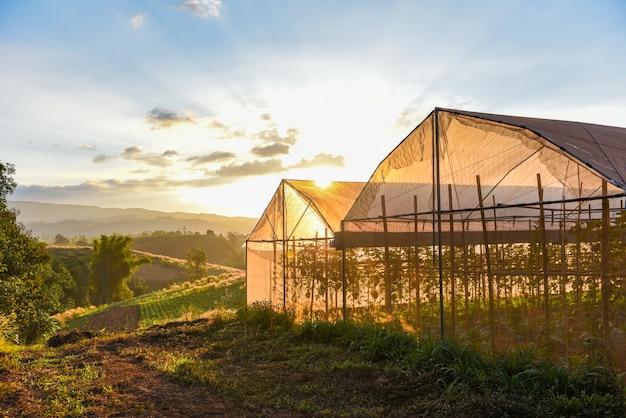 Plantas vegetais com efeito de estufa e produtos agrícolas de fruticultura em telhados de cultivo ao pôr do sol