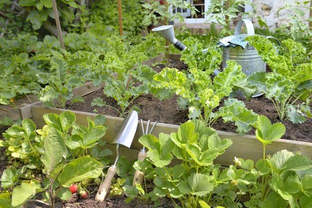 Plantas vegetais que crescem em um jardim
