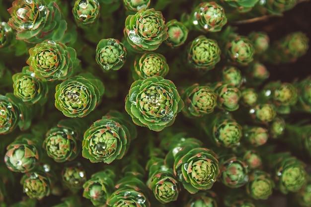 Plantas verdes com gotas de orvalho crescendo na natureza