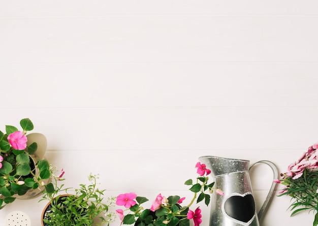 Plantas verdes com pote de rega