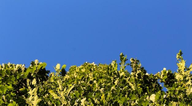 Plantas verdes crescendo com céu azul ao fundo