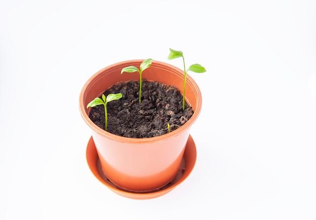 Plantas verdes crescendo em vaso de flores
