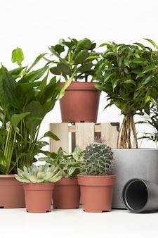 Plantas verdes de interior, cactos em vasos em um fundo vazio e limpo
