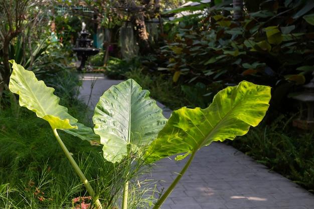 Plantas verdes de jardim ao ar livre no resort, fotografia de stock