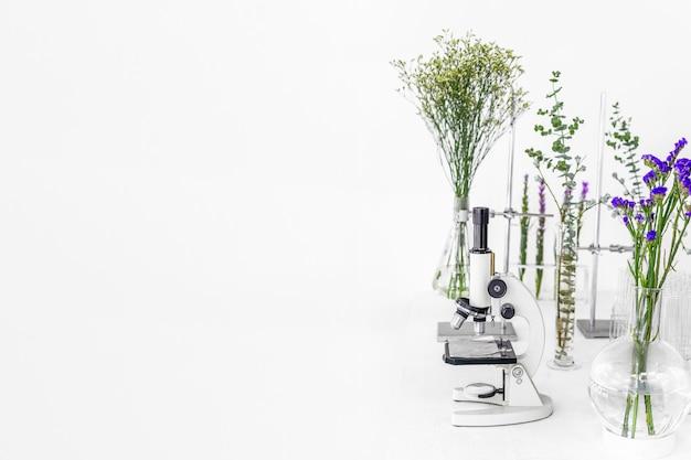 Plantas verdes e equipamentos científicos em biologia laborotária.