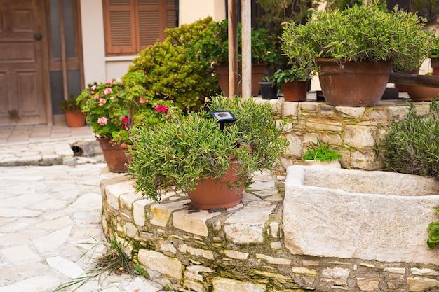 Plantas verdes em vasos ao ar livre. diferentes plantas em vasos e mudas