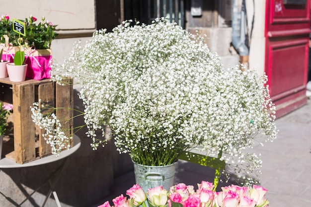 Plantas verdes em vasos em lindo vaso ao ar livre