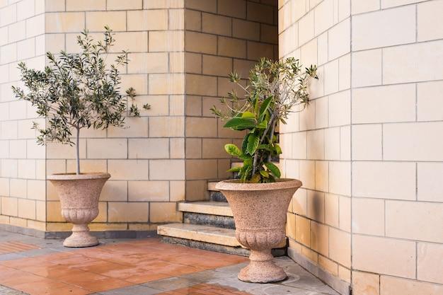 Plantas verdes em vasos na frente da entrada do edifício.
