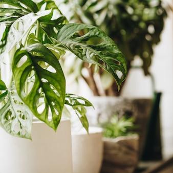 Plantas verdes em vasos na janela. decoração de casa e conceito de jardinagem.