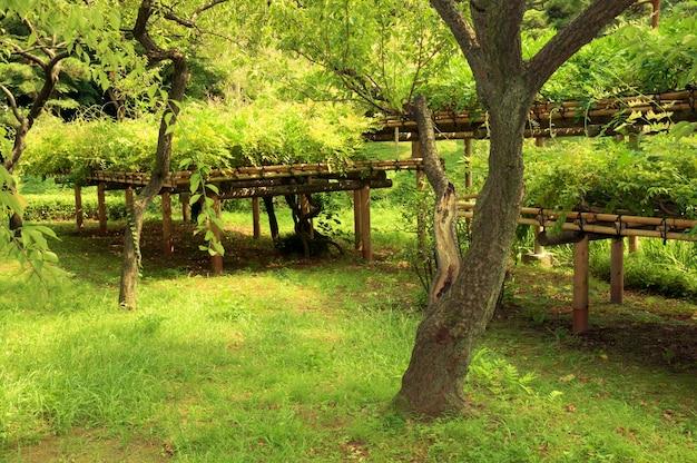 Plantas verdes frescas no famoso jardim korakuen zen em tóquio no verão