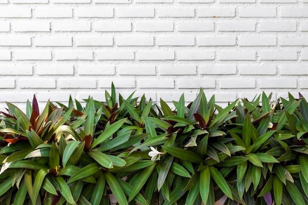 Plantas verdes naturais em fundo de parede de tijolos com espaço de cópia
