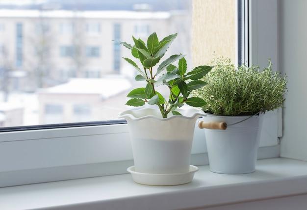 Plantas verdes no peitoril da janela no inverno