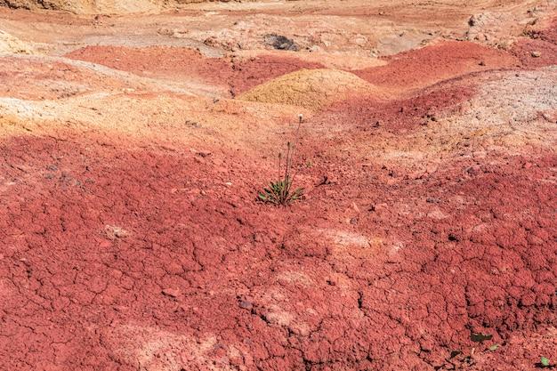 Plantas verdes que crescem em terra rachada seca, solo. terra desolada com pouca grama. dia da terra de eco ou conceito de esperança. vida em marte.