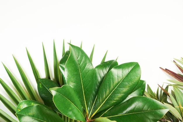 Plantas verdes tropicais exóticas deixam fundo com espaço de cópia em branco