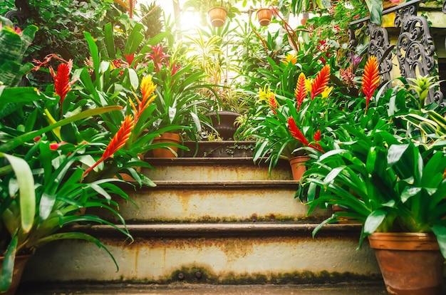 Plantas vriesea com flores em matagais de floresta tropical úmida.