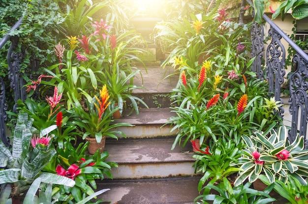 Plantas vriesea em vasos nas escadas da floresta tropical úmida.