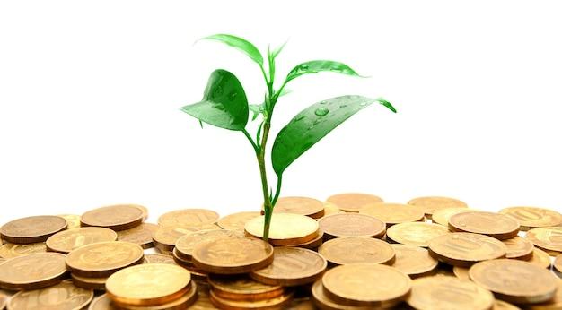 Plante e moedas de ouro