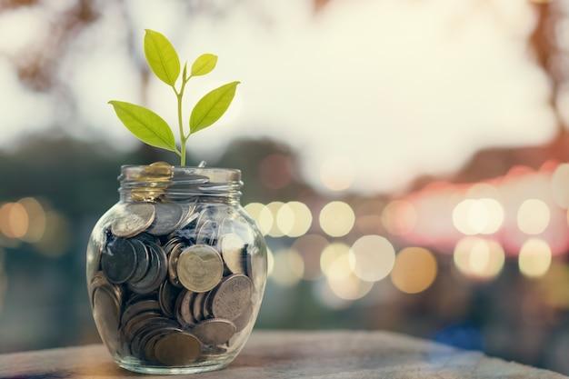 Plante em moedas da pilha na garrafa, no conceito crescente do dinheiro e no sucesso do objetivo.