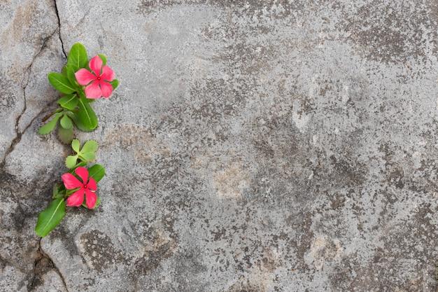 Plante o crescimento com a flor cor-de-rosa na folha verde, árvore nova com a rachadura no pavimento.