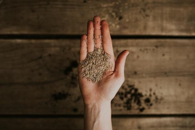 Plante sementes em um flatlay de palma