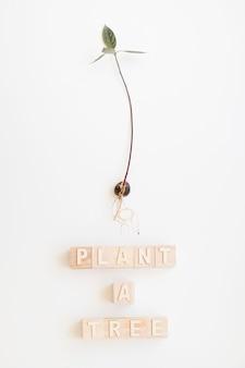 Plante uma árvore palavras e pétala