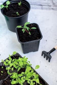 Plantinha brota em plástico preto crescer caixa