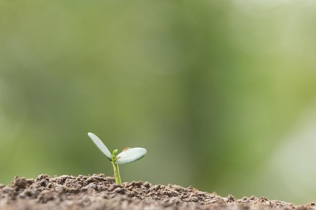 Plantio agricultura, semeando, crescendo, negócio, growht, cima, conceito