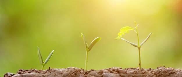 Plantio agricultura, semeando, crescendo