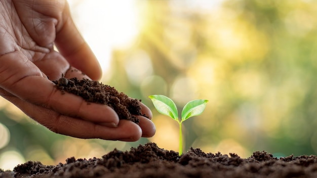 Plantio de árvores e plantio de árvores, incluindo o plantio de árvores pelos fazendeiros manualmente, ideias de crescimento de plantas.