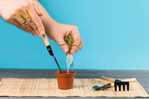 Plantio de mãos