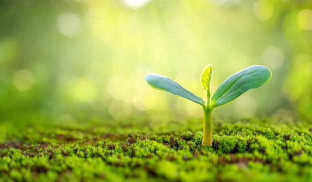 Plantio de mudas de plantas jovens na luz da manhã no fundo da natureza
