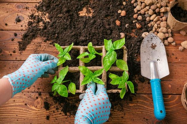 Plantio de mudas em estufa na primavera close-up
