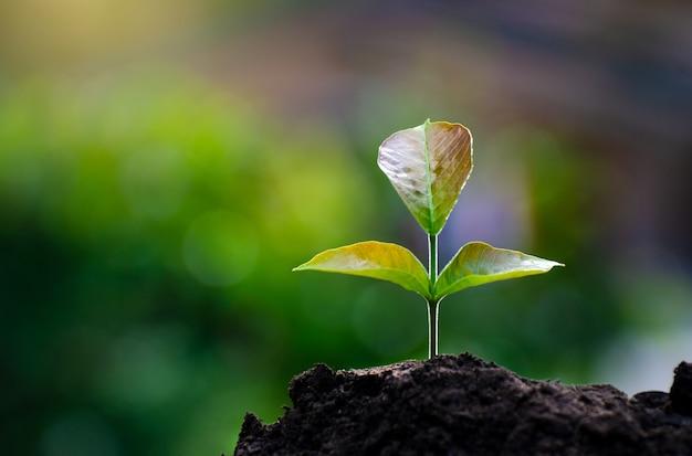 Plantio de mudas jovem planta na luz da manhã no fundo da natureza