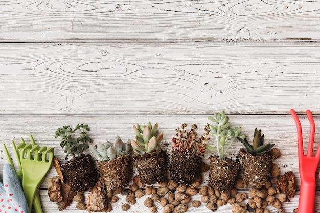 Plantio de suculentas em vasos com solo japonês e pá