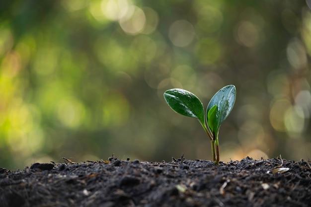 Plântulas e plantas que crescem no solo