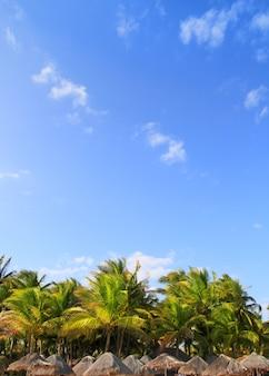 Playa del carmen palapa tropical palmeiras méxico