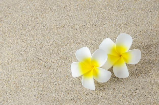 Plumeria flores em fundo de areia
