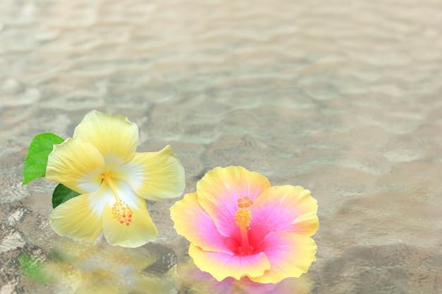 Plumeria flores sobre o vidro de padrão de onda.